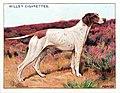 Wills pointer dog card.jpg