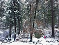 Winter in Yosemite December 2016.jpg
