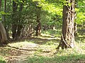 Woodland Path in Frenchmoor Woods - geograph.org.uk - 422838.jpg