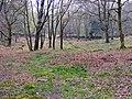 Woodland near Gwern y Baedd - geograph.org.uk - 1376311.jpg