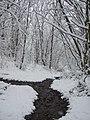 Woodland near Merrydale brook, Slaithwaite - geograph.org.uk - 1659551.jpg