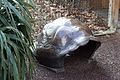 ZSL London - Giant Tortoise shell (03).jpg