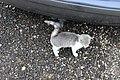 Zemianske Podhradie, mazlící se kotě (5).jpg