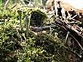 Zieminskie Gory, flora.jpg