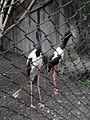 Zoo Kathmandu Nepal (5086487818).jpg