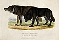 Zoological Society of London; two wolves of Hudson Bay. Colo Wellcome V0023151.jpg