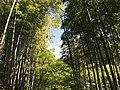 """""""Sky and Bamboo- IMG2023"""".jpg"""