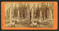 """Starvation Camp."" Stumps of trees cut by the Donner Party in Summit Valley, Placer Co., 1846, by Thomas Houseworth & Co..png"