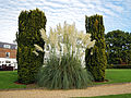 'Cortaderia selloana' pampas grass - Beale Arboretum - West Lodge Park - Hadley Wood - Enfield London 2.jpg