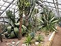 ,Cactuses.jpg