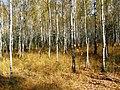 Березово-сосновий ліс оково-різнотравним підліском у заказнику Мисловичі.jpg