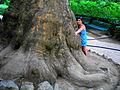 Большое дерево.JPG