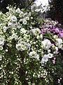 Білі Квіти в ботанічному саду.jpg