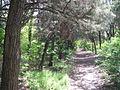 Дендрологічний парк 128.jpg
