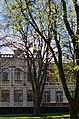 Дерево буку червоного у місті Хмельницькому по вулиці Гагаріна, 5.jpg