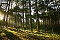 Кореизская тропа, подъем на Ай-Петри.jpg