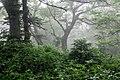 Лес на склонах влк. Менделеева 3.jpg
