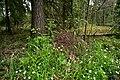 Муравейник в национальном парке.jpg