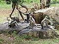 Национальный парк Яла. Обезьяны. - panoramio.jpg