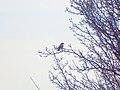 На фоні пташки.JPG