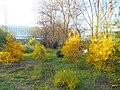 Одеса, Ботанічний сад, Французький бульвар 04-2018 10.jpg