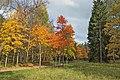 Ораниенбаум. Золотая осень в Верхнем парке.jpg