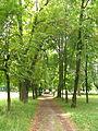 Парк, Вороновиця.JPG