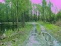 Перекрёсток улиц Волхова и Лабораторная - panoramio.jpg