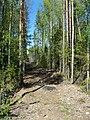 Просека - panoramio (5).jpg