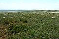Пространства степного ковыля - panoramio.jpg