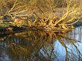 Река Плиса - panoramio.jpg