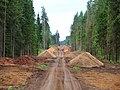 Строительство лесной дороги - panoramio.jpg