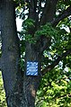 Царський дуб, Перетин 2-ї лінії та вул. Гамарника.jpg