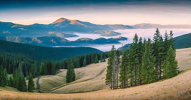 5 та 6 місце. Карпатський біосферний заповідник. © Віталій Башкатов
