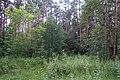 Черняевский лес, участок за ДКЖ 4.jpg