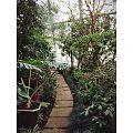 Чернівецький ботанічний сад.jpg