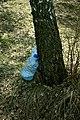 Юрівський Збір березового соку DSC 0526.jpg