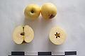 Яблоня сорта Ренет ананасный.jpg