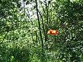 Արզականի և Մեղրաձորի արգելավայր-134.jpg