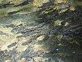 อุทยานแห่งชาติน้ำตกพลิ้ว จ.จันทบุรี (53).jpg