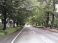 「BS工場」入り口より篠山城を臨む - panoramio.jpg