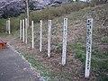 うつぶな公園 - panoramio (29).jpg