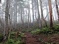 オオシラビソの森を行く.jpg