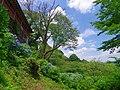 七曲りのあじさい 吉野山にて 2013.6.17 - panoramio (4).jpg