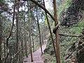 大神仙居风景区的藤绕树 - panoramio (1).jpg