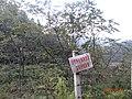 弥核桃保护区 - panoramio.jpg