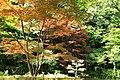 東高根森林公園 - panoramio (35).jpg