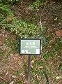 植物園中的植物及樹木花草(包括歷史遺跡)-33.jpg