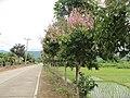 泰国pai县街头 - panoramio (12).jpg