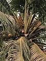 琅勃拉邦的树3252.jpg